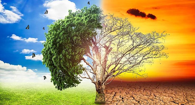 Os impactos ambientais em Brumadinho