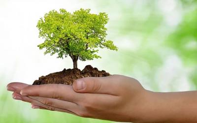 Uma atitude de preservação: O que podemos fazer para preservar o meio ambiente?