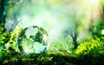 Importância da Consultoria Ambiental